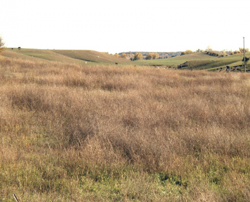 Rolling grasslands of O'Brien County Iowa.