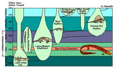 A graph illustrating the relationships between early amphibians and reptiles.