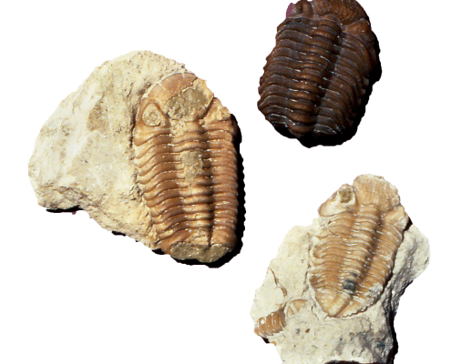3 TRILOBITE fossils, found in Scott County, are 375 million years old (Devonian).