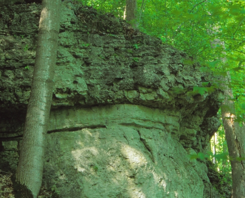 Rocky outcrop in a dark green wooded area