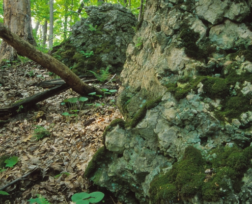 Rock outcrops and green vegetation in a shadowy forest glen