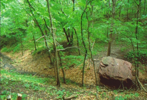Large boulder in a grove of trees