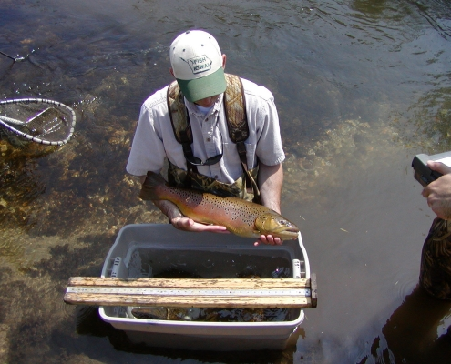 A man standing in a stream holds a large trout